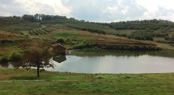 Mercier Hills